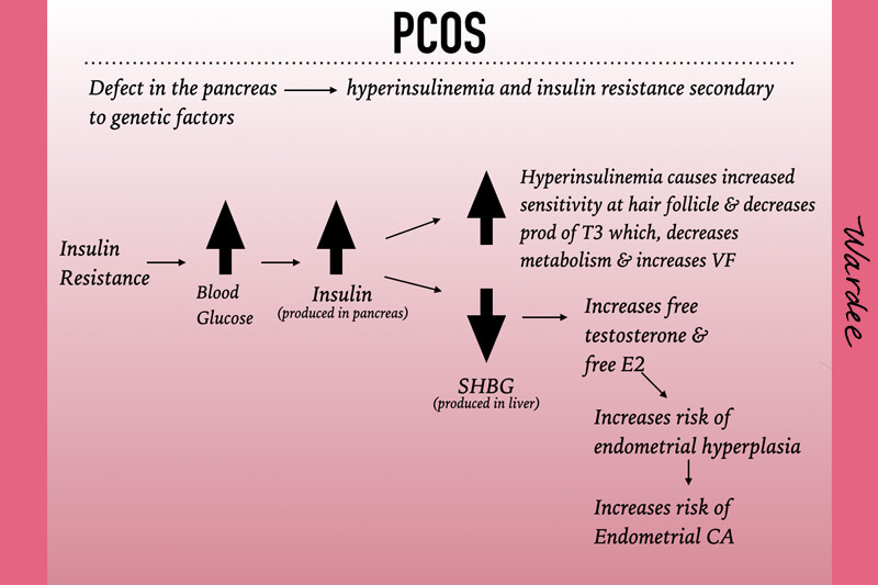 Diagram of the causes of PCOS as well as the cascade effect of insulin resistance.